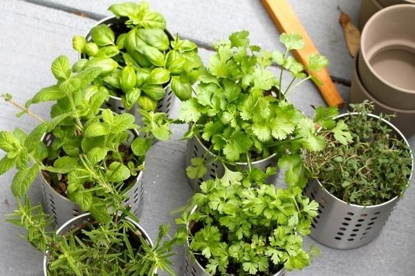 planting-herb-garden-balcony-garden-ideas-how-to-grow-herb-garden